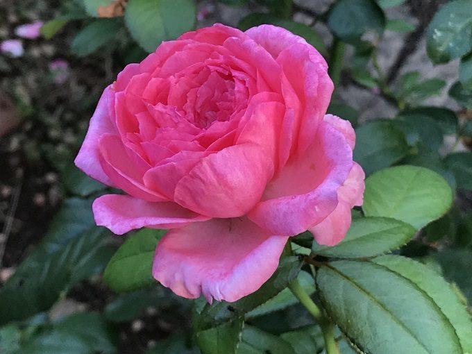 モリナール三番花の開花