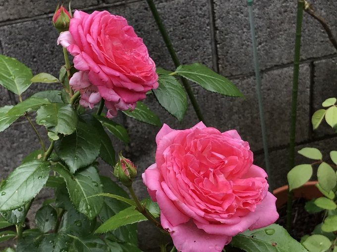 開花したモリナール